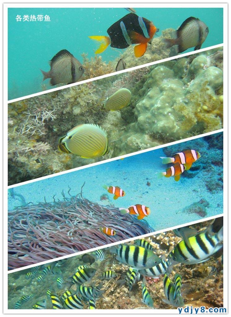 三亚分界洲岛持证潜水fundiving