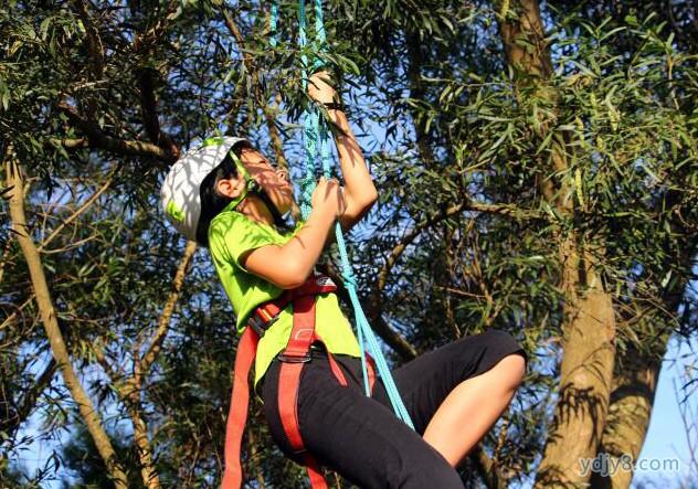 攀树课程2